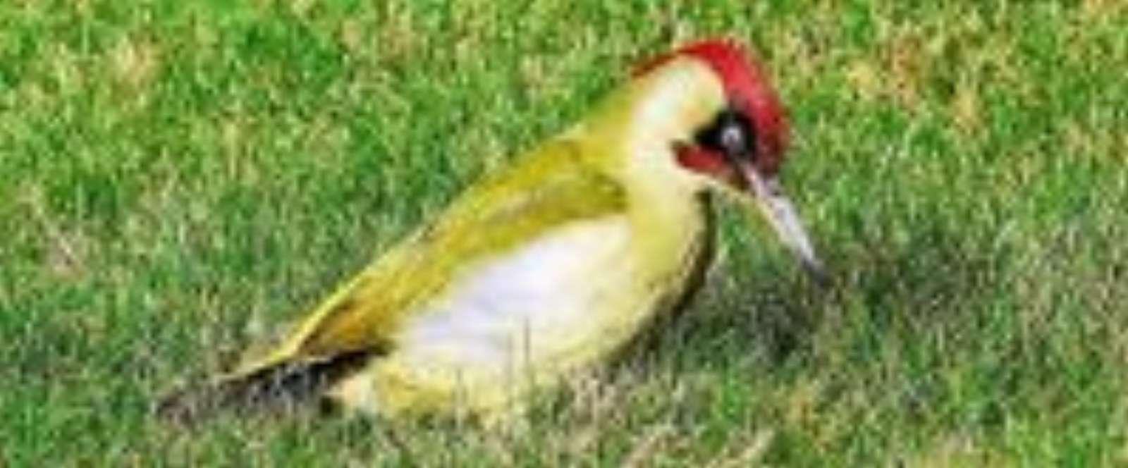 Nature-Les Oiseaux